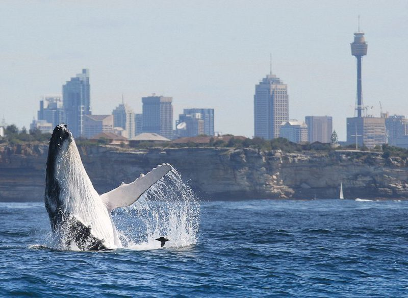 Winter Boating in Sydney
